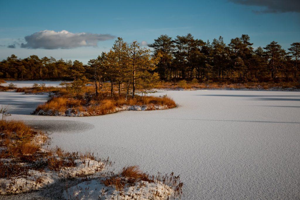 Ziema Niedrjua-Pikas purvā